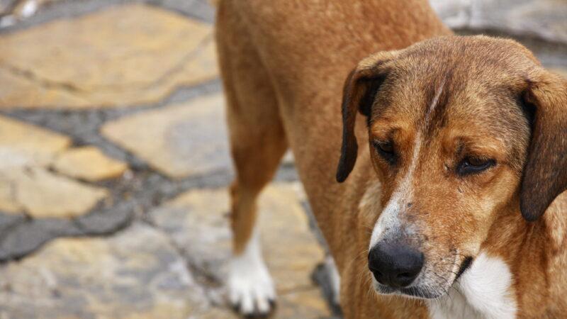 Sevgi Yolu'ndaki köpekler ve atlar arasında gerilim